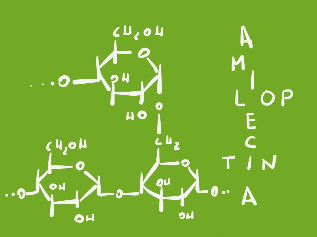 amilopectina