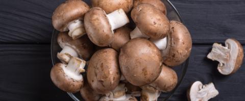 mushroom consumption