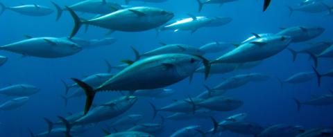 Regolamento origine tonno