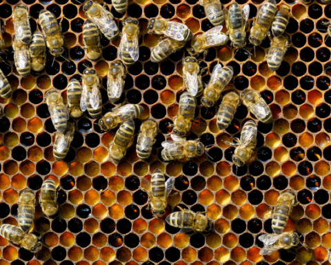 nutrition bees