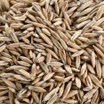 segale grano peso